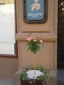 троянда-в-мармуровій-крихті
